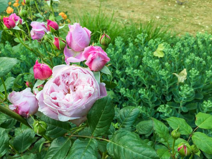 Flores en Londres