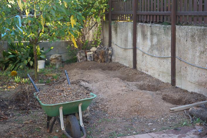 plantar peonias
