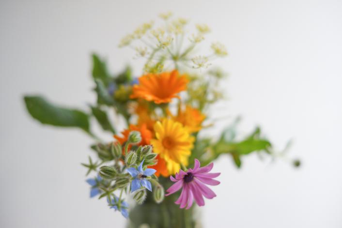 secar flores silvestres