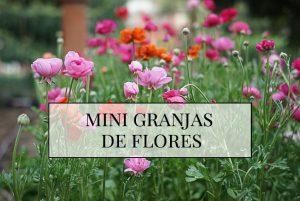 mini-granja-de-flores