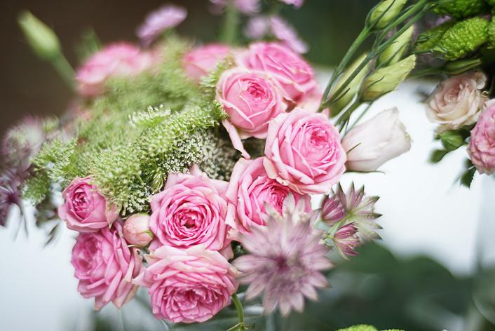 rosa-astrantia-ammi-majus