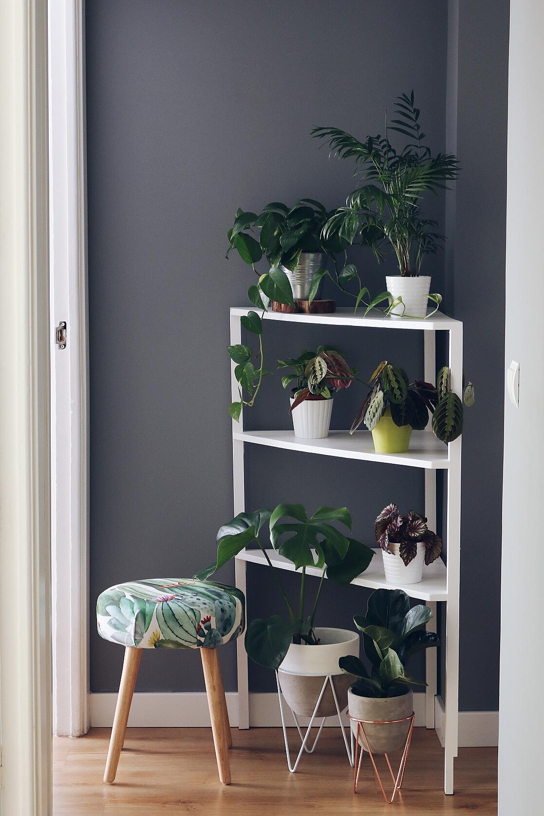 Guia Plantas de Interior para mataplantas