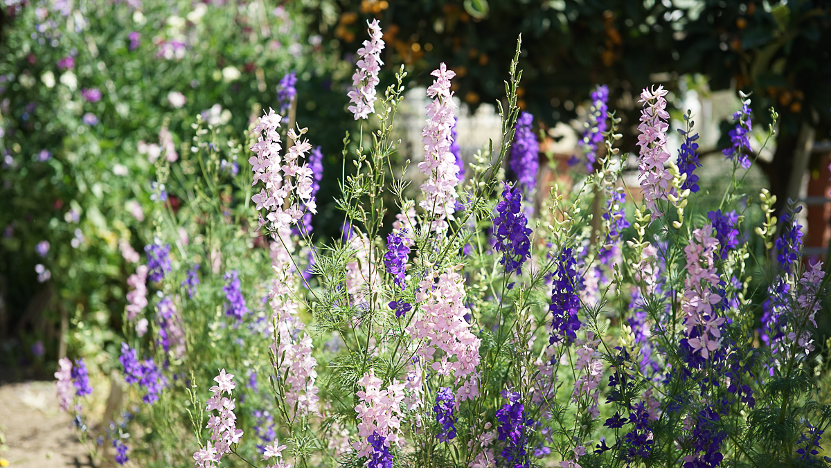 granja de flores floritismo