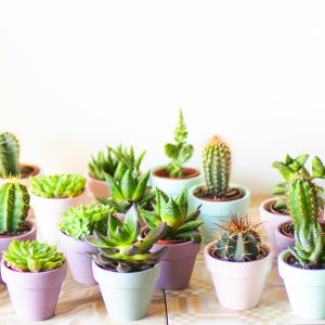 super pastel cactus