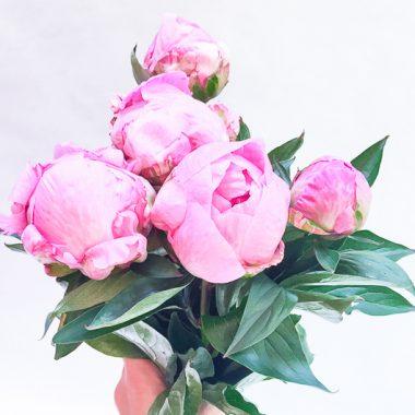 ramo-de-peonias-Floritismo