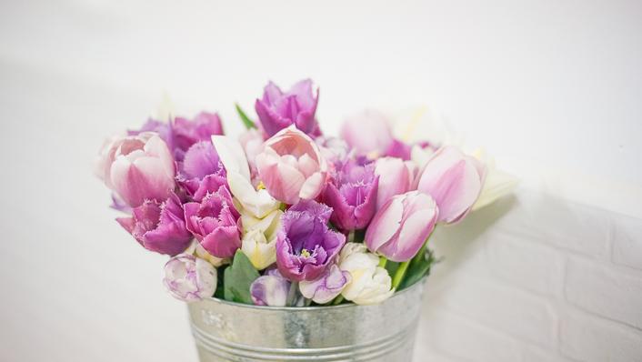 tulipanes cultivo-12