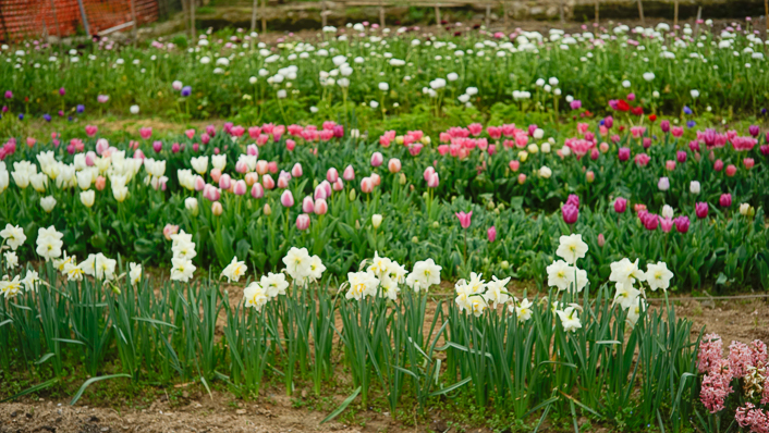 granja-de-flores