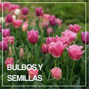 BULBOS Y SEMILLAS