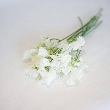 sweet pea blanco