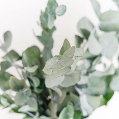 Eucalipto preservado floritismo