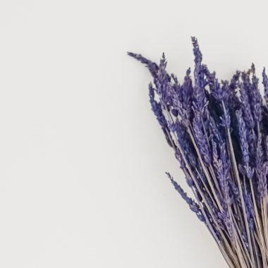 lavanda natural preservada lila Floritismo