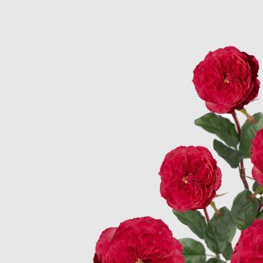 Rosal de Jardín - Meilland - Alain Souchon - Floritismo
