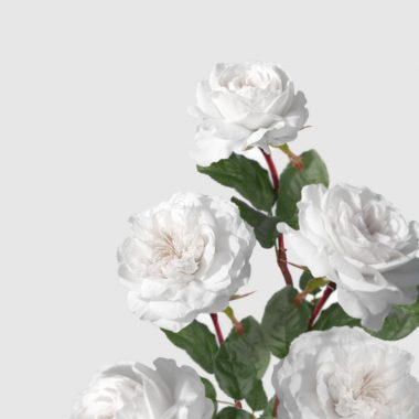 Rosal de Jardin - Meilland - Pierre Arditi - Floritismo