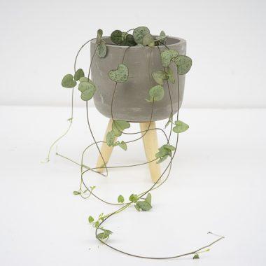 Macetero Cemento y Madera Mini - Floritimo