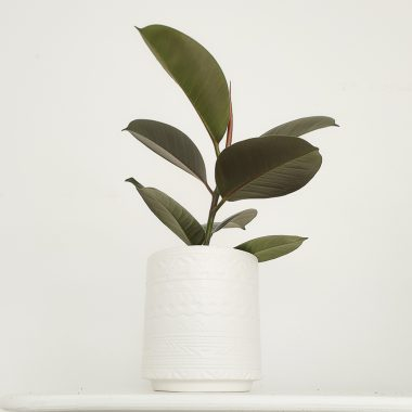 Macetero blanco labrado - Floritismo