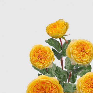 Rosal Ingles Graham Thomas - David Austin - Floritismo