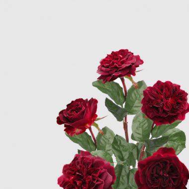 Rosal Ingles Mustead Wood - David Austin - Floritismo