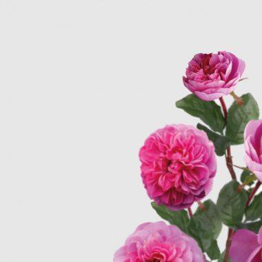 Rosal de Jardin - Meilland - Allegro - Floritismo