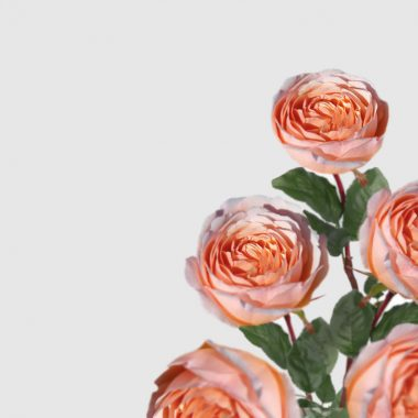 Rosal de Jardin - Meilland - Charlene de Monaco - Floritismo