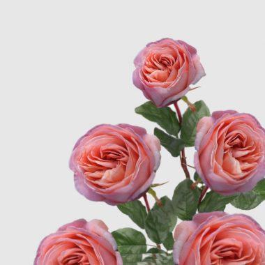 Rosal de Jardin - Meilland - Mademoiselle - Floritismo