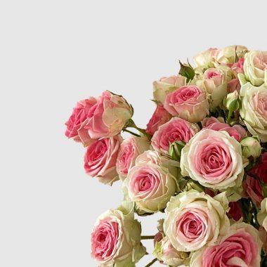 Rosal de Jardin - Meilland - Mini Eden - Floritismo