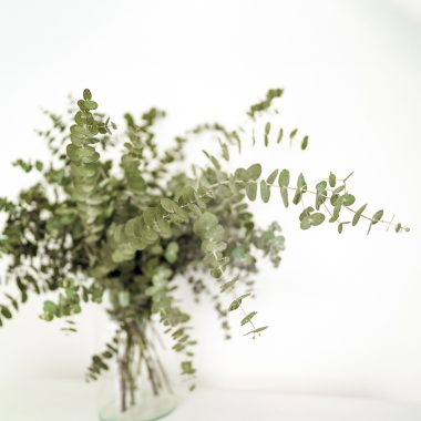 Ramo Eucalipto Cinerea - Floritismo