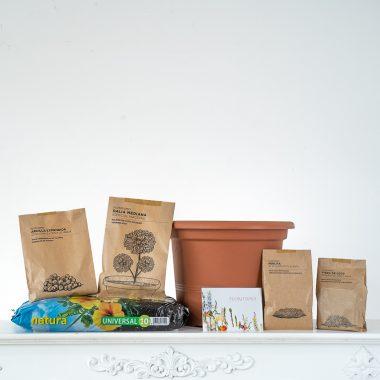 Pack Dalia Maceta - Floritismo